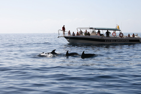 dolphin_watching